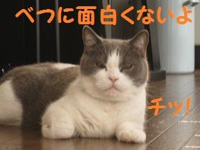 ごろごろ、ぴー(2).jpg