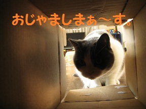 とうにゅう (2).jpg
