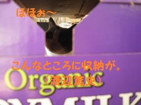 とうにゅう (3).jpg