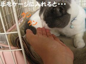 なめるねこ (2).jpg