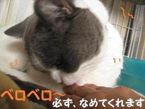 なめるねこ (4).jpg