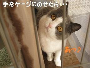 にげちゃ (1).jpg