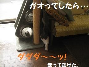 にげちゃ (3).jpg