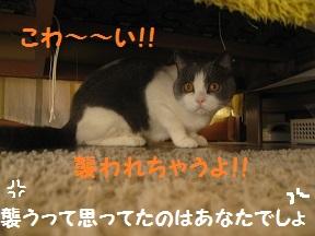 にげちゃ (4).jpg