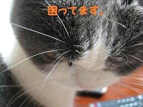 のせてみた (1).jpg