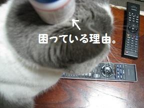 のせてみた (2).jpg