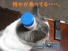 のせてみた (3).jpg