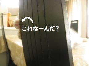 のびねこ (1).jpg