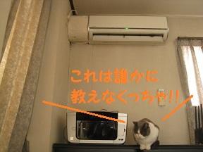 ははっけん (4).jpg