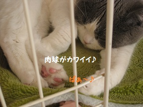 はる13 (2).jpg