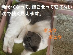 はる13 (4).jpg