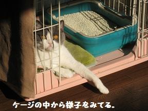 ふぁぶる (2).jpg