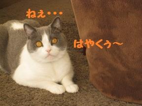 ふぁぶる (3).jpg