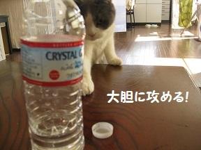 ふたがほしい2 (1).jpg