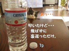 ふたがほしい2 (2).jpg