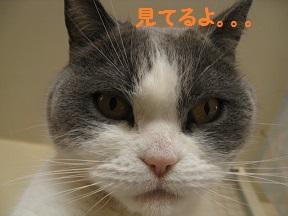 ぷいっつ (3).jpg