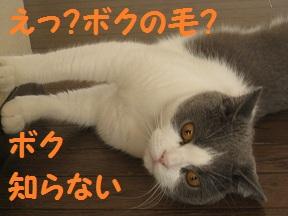 ほこりあるよ (4).jpg