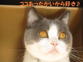 ぼくぼっくう (1).jpg