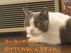 まだあちゅい (1).jpg