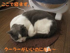 まだあちゅい (3).jpg