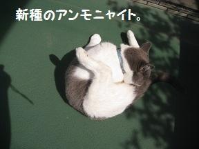 まんまる (2).jpg