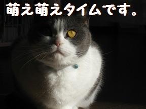 萌えたい? (1).jpg