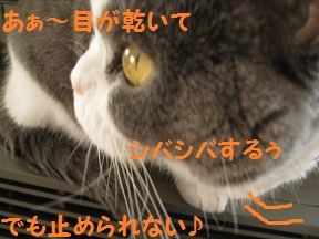 IMG_2195.jpg