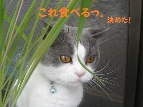 IMG_3470.jpg