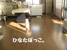IMG_4204.jpg