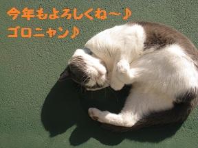 IMG_4448.jpg