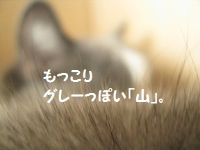 IMG_6089.jpg