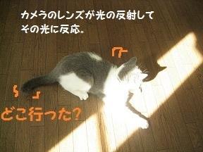IMG_6597.jpg
