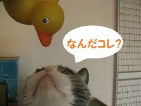 IMG_7259.jpg