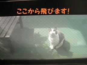 jump (3).jpg